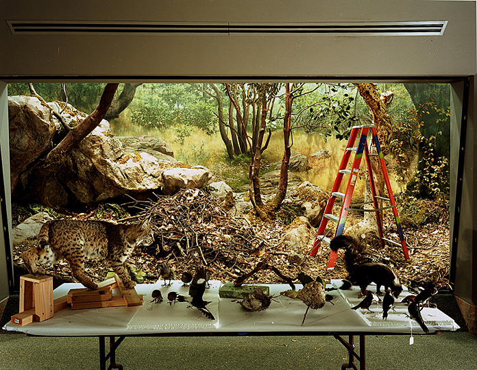 Richard Barnes Diorama With Bobcat Removal